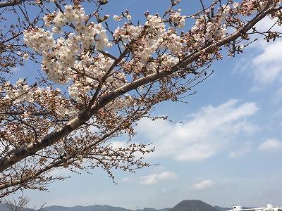 f:id:kabutoyama-tigers:20160404204948j:image
