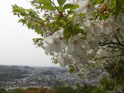 f:id:kabutoyama-tigers:20160413182616j:image