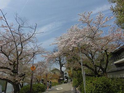 f:id:kabutoyama-tigers:20160413183321j:image
