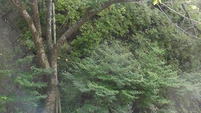 f:id:kabutoyama-tigers:20160717173546j:image