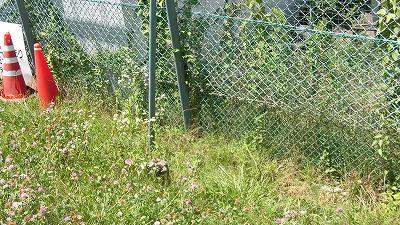 f:id:kabutoyama-tigers:20160724180618j:image