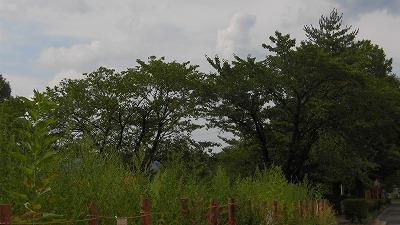 f:id:kabutoyama-tigers:20160801145501j:image