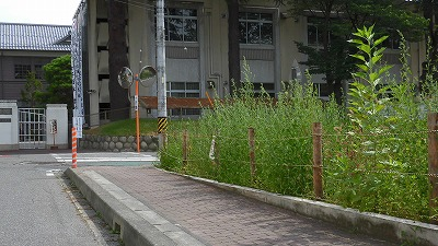 f:id:kabutoyama-tigers:20160801150133j:image