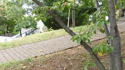 f:id:kabutoyama-tigers:20160828202548j:plain