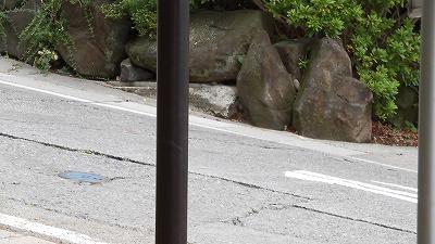 f:id:kabutoyama-tigers:20160829172714j:plain