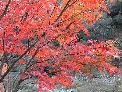 f:id:kabutoyama-tigers:20161127182748j:plain