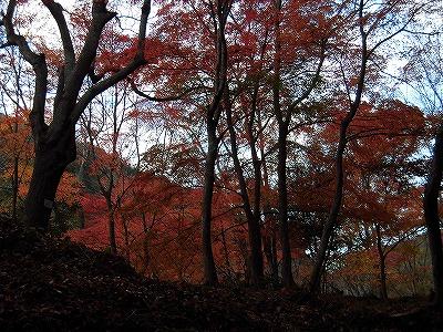 f:id:kabutoyama-tigers:20161127182814j:plain