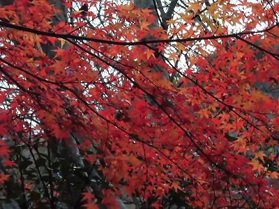 f:id:kabutoyama-tigers:20161127182824j:plain