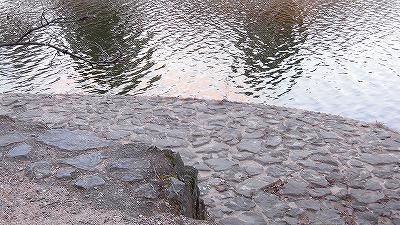f:id:kabutoyama-tigers:20161212092113j:plain