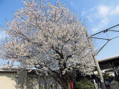 f:id:kabutoyama-tigers:20170417184234j:plain