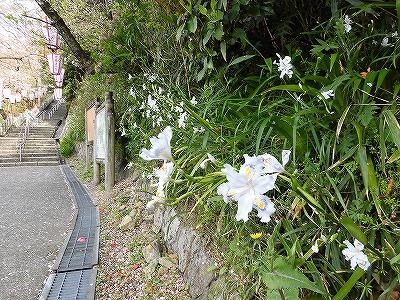 f:id:kabutoyama-tigers:20170417190359j:plain