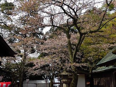 f:id:kabutoyama-tigers:20170417192625j:plain