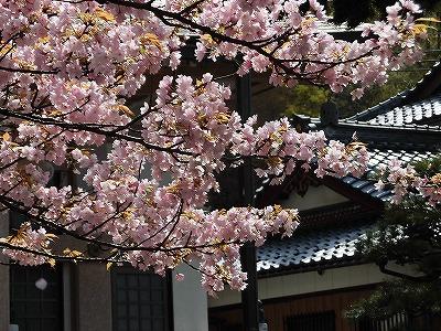 f:id:kabutoyama-tigers:20170417194140j:plain