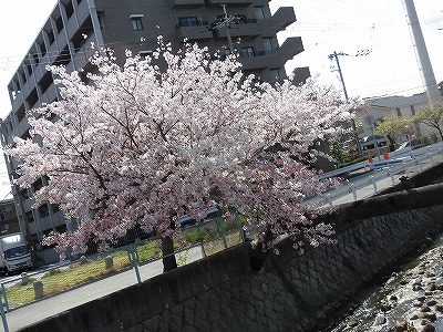 f:id:kabutoyama-tigers:20170417195809j:plain