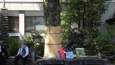 f:id:kabutoyama-tigers:20170502204407j:plain