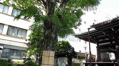 f:id:kabutoyama-tigers:20170502205650j:plain