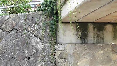 f:id:kabutoyama-tigers:20171108162139j:plain