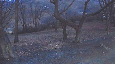 f:id:kabutoyama-tigers:20180129212527j:plain