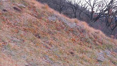 f:id:kabutoyama-tigers:20180207102627j:plain