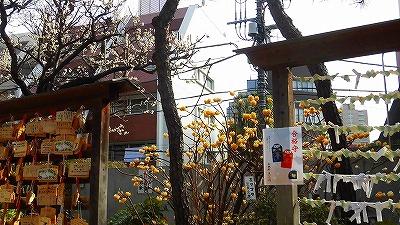 f:id:kabutoyama-tigers:20180304152127j:plain