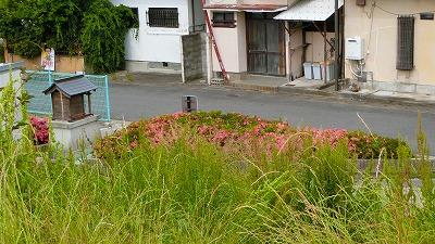 f:id:kabutoyama-tigers:20180613171122j:plain