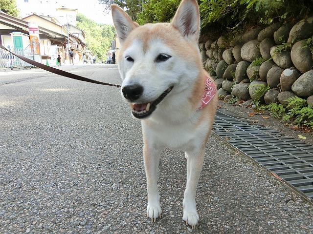 f:id:kabutoyama-tigers:20180729163826j:plain