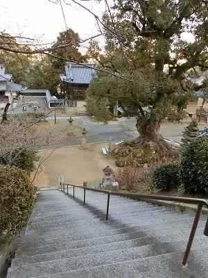 f:id:kabutoyama-tigers:20190321181823j:plain