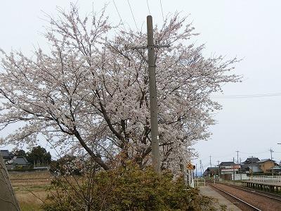f:id:kabutoyama-tigers:20190531153349j:plain