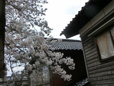 f:id:kabutoyama-tigers:20190610155637j:plain