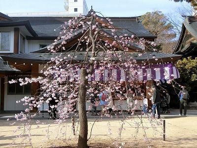 f:id:kabutoyama-tigers:20190630180155j:plain