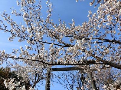 f:id:kabutoyama-tigers:20190630180405j:plain