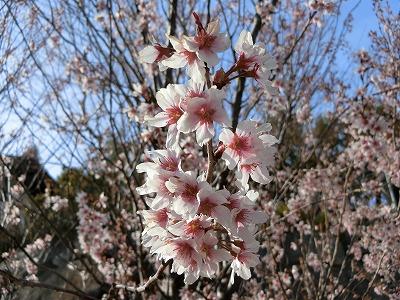 f:id:kabutoyama-tigers:20190630180435j:plain