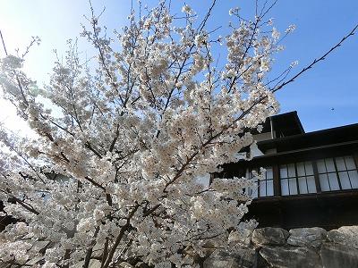 f:id:kabutoyama-tigers:20190630180447j:plain