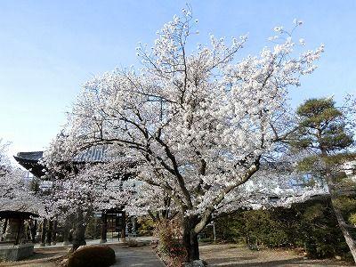 f:id:kabutoyama-tigers:20190703083202j:plain