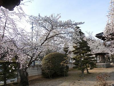 f:id:kabutoyama-tigers:20190703083232j:plain