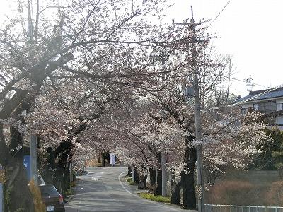 f:id:kabutoyama-tigers:20190703091519j:plain