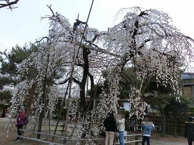 f:id:kabutoyama-tigers:20190703104027j:plain