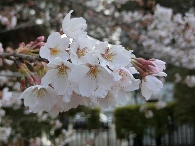 f:id:kabutoyama-tigers:20190703104111j:plain