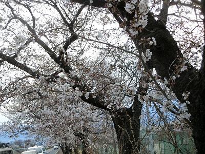 f:id:kabutoyama-tigers:20190703114757j:plain