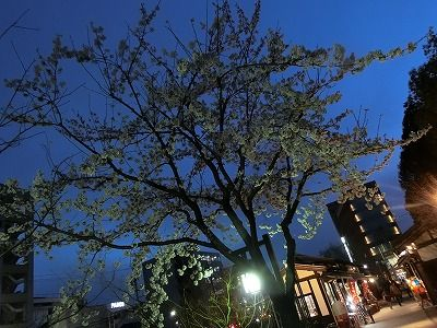 f:id:kabutoyama-tigers:20190703121132j:plain