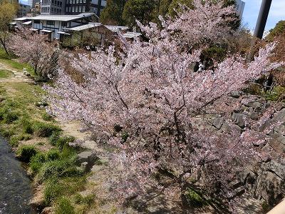 f:id:kabutoyama-tigers:20190717080727j:plain
