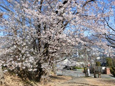 f:id:kabutoyama-tigers:20190717122406j:plain