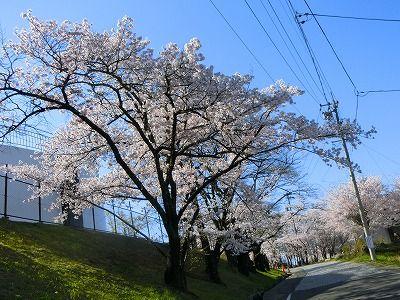 f:id:kabutoyama-tigers:20190717122457j:plain
