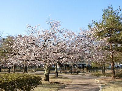 f:id:kabutoyama-tigers:20190717134032j:plain