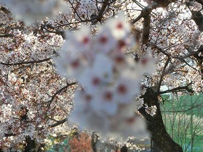 f:id:kabutoyama-tigers:20190717134244j:plain