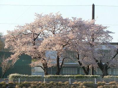 f:id:kabutoyama-tigers:20190717134330j:plain