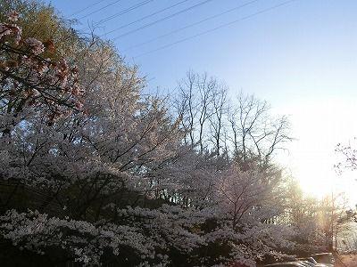 f:id:kabutoyama-tigers:20190717135008j:plain