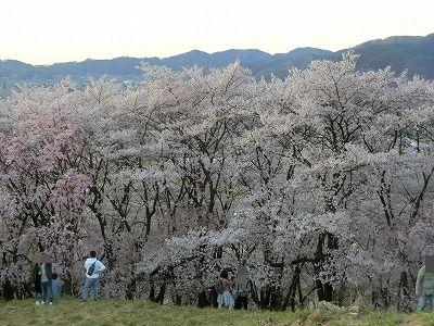 f:id:kabutoyama-tigers:20190717140520j:plain