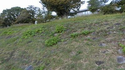 f:id:kabutoyama-tigers:20191014160844j:plain