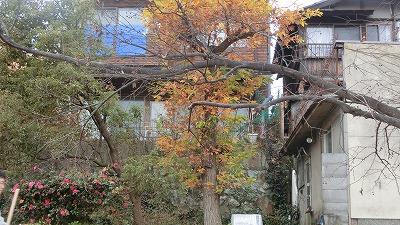f:id:kabutoyama-tigers:20200515163020j:plain